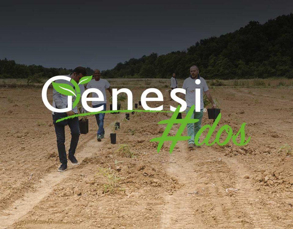 genesi-dos-bamboo