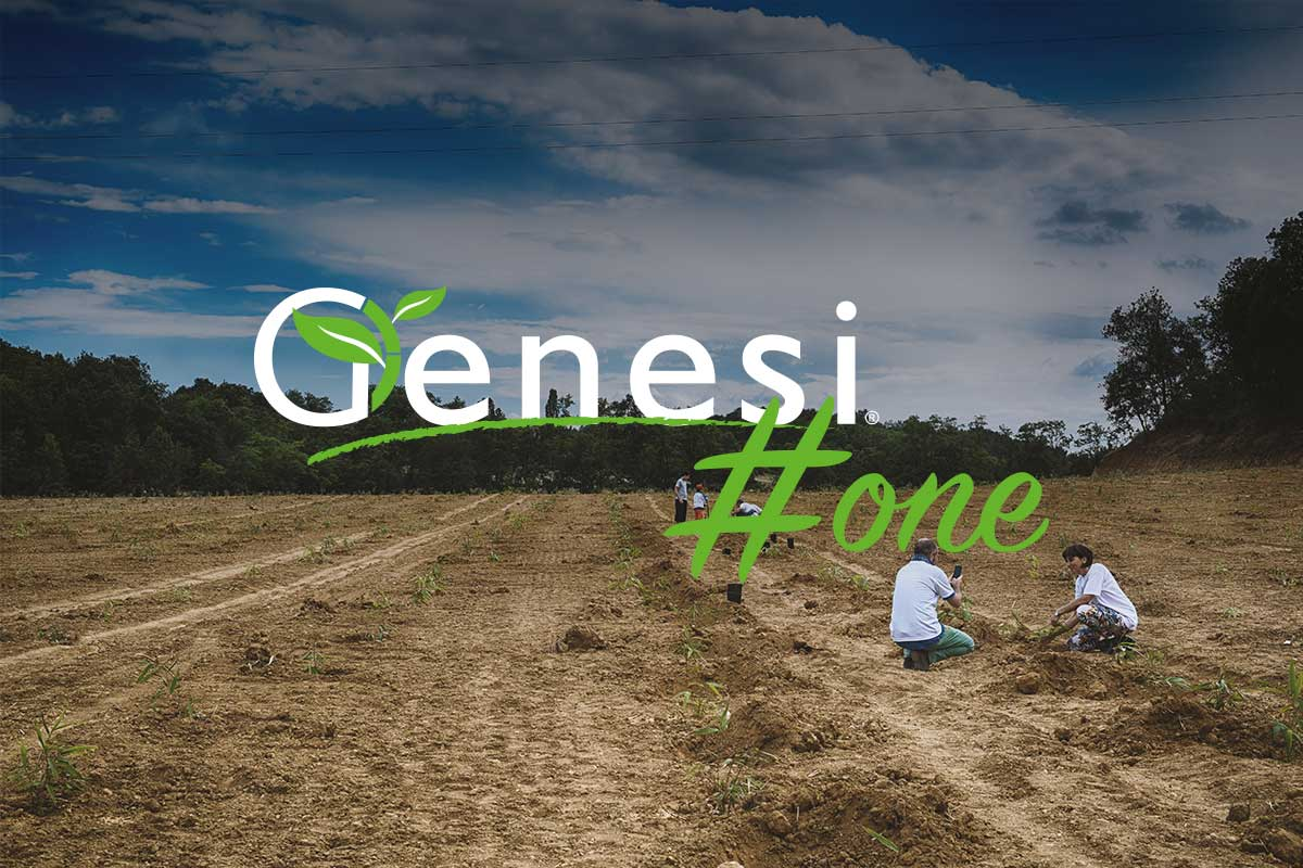 genesi-one-bamboo