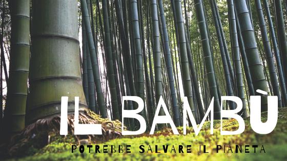Il bambù potrebbe salvare il Pianeta!