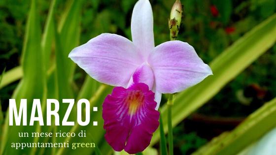 Marzo: un mese ricco di appuntamenti green