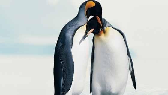 Oggi è la Giornata Mondiale del Bacio: anche nel mondo animale