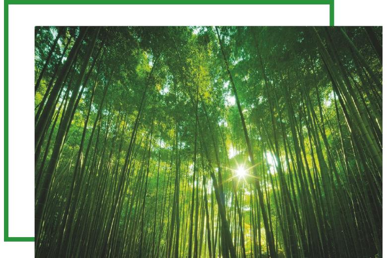 bamboo-genesi-life